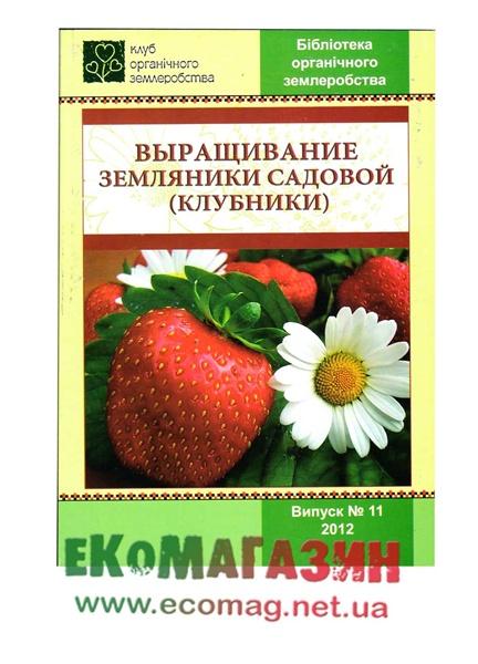 Выращивание земляники садовой (клубники)